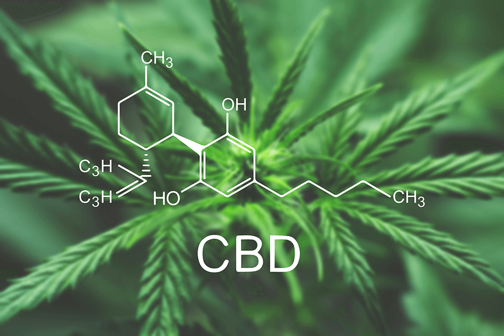 kannabidiol CBD co to jest