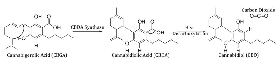 cbg cbda cbd - synteza kannabidiolu