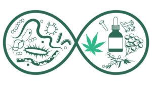 Olej CBD na bakterie i superbakterie?