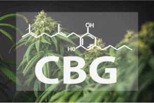 CBG – 10 właściwości, działanie, korzyści, które daje kannabigerol