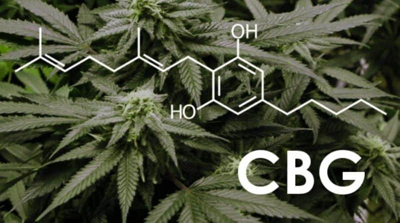 CBG - Kannabigerol - Kanbigerol - Cannabigerol - Pure Hemp
